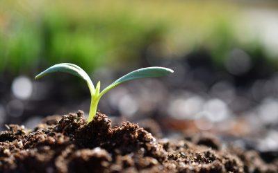 Aménager un jardin de maison neuve, comment y parvenir ?